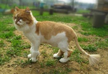 Когда отрастает шерсть у кота