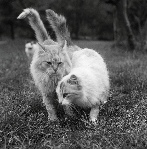 Лекарства, опасные для кошек