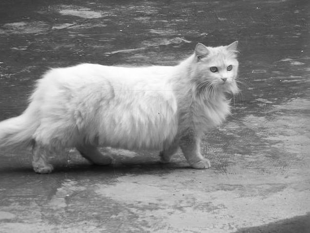 Кошка не ест 3 дня,у нее диарея.Что делать?!!!Вызвать ...