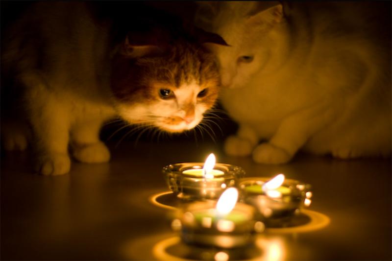 http://www.moi-kotenok.ru/iz_gizni/cats-and-holidays/4.jpg