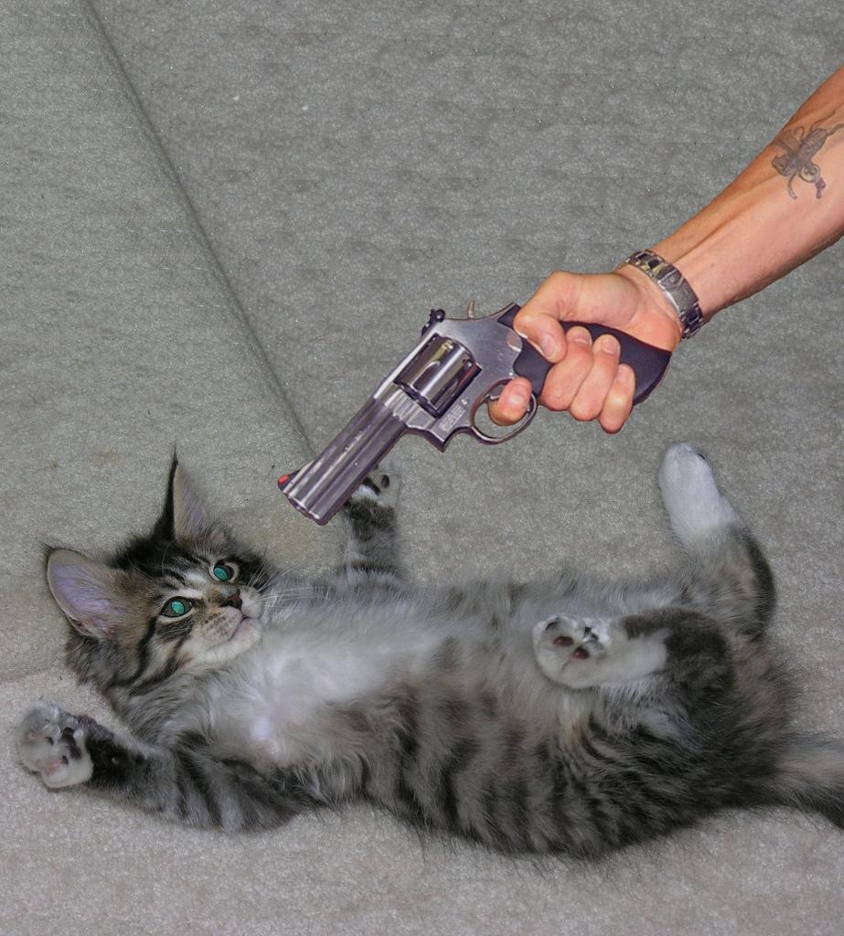 Если в туфли написал кот