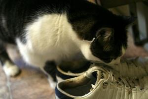 Запах кошачьей мочи: причины