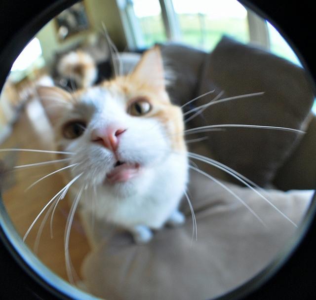 Взгляд на кошек сквозь глаза рыбы