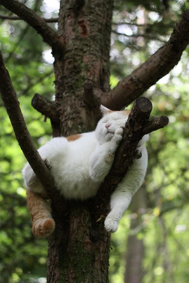 Широнеко - самый расслабленный кот на земле