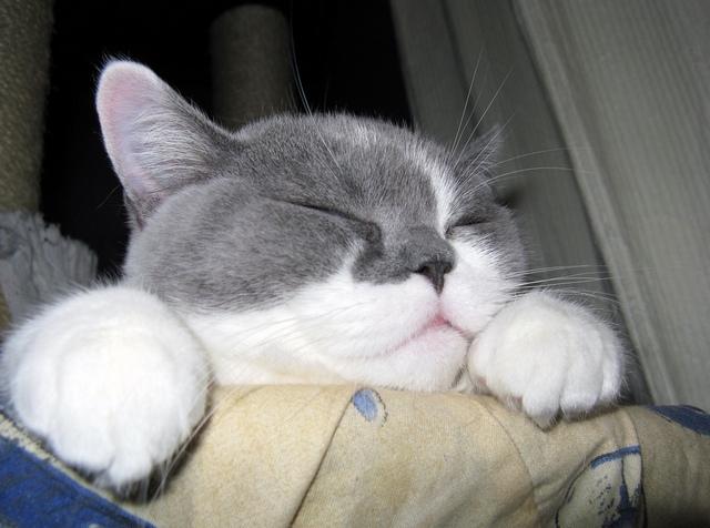 Топ 15 характерных черт кошек