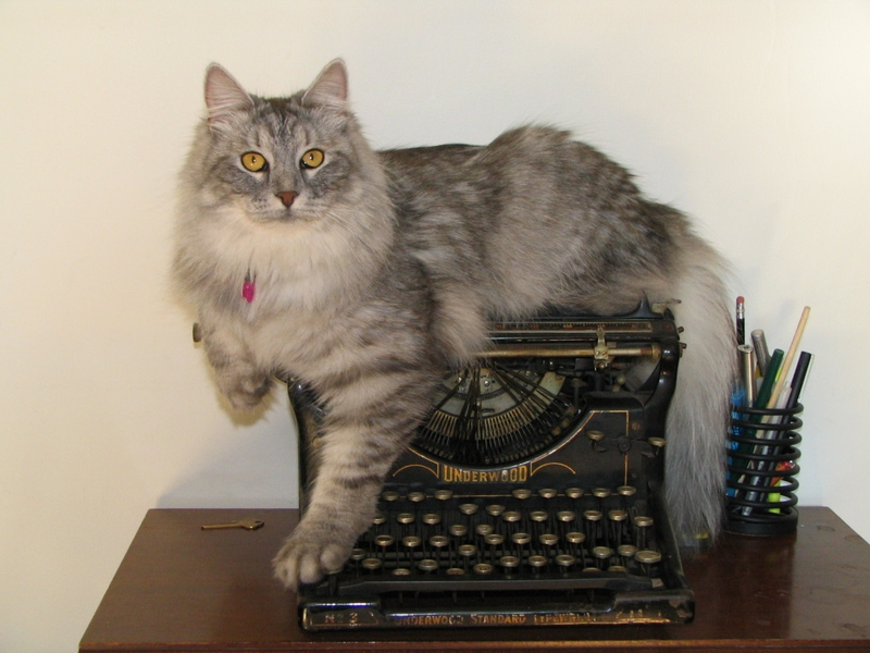 В отношениях с людьми сибирская кошка